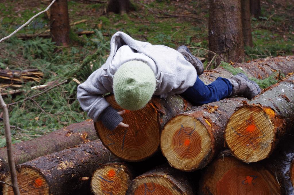 Elija zählt die Jahresringe eines gefällten Baums.