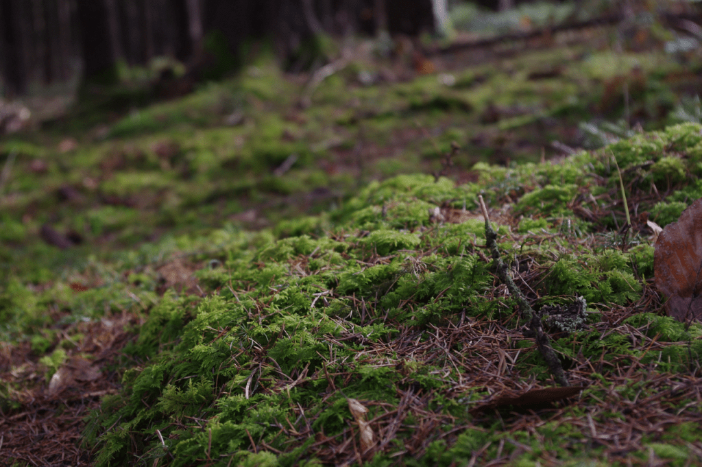 Das Licht auf dem Waldboden war einfach wunderschön und die Farbe wirkten gleich noch prächtiger.
